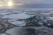 Norway, Svalbard, Spitsbergen von Danita Delimont