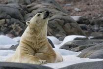 Norway, Svalbard by Danita Delimont