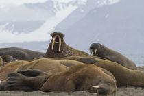 Norway, Svalbard, Prins Karls Forland von Danita Delimont