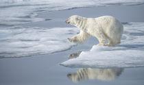 Arctic Ocean, Norway, Svalbard von Danita Delimont