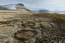 Norway, Svalbard, Nordaustlandet, Palanderbukta Zeipelodden von Danita Delimont