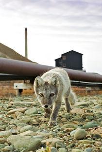 Norway, Svalbard, Longyearbyen von Danita Delimont