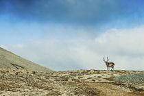 Arctic, Svalbard von Danita Delimont