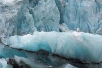 Svalbard. Spitsbergen. Hornsund. Brepollen. Black-legged kit... von Danita Delimont