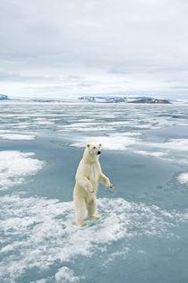 Norway, Svalbard Archipelago, Spitsbergen by Danita Delimont
