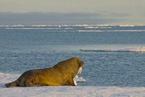 Greenland Sea, Norway, Svalbard Archipelago, Spitsbergen by Danita Delimont