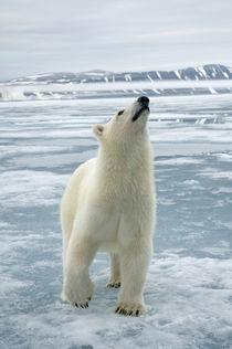Norway, Svalbard Archipelago, Spitsbergen von Danita Delimont