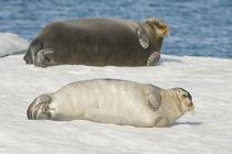 Norway, Spitsbergen, Greenland Sea von Danita Delimont