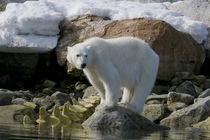 Norway, Spitsbergen, Sallyhammna von Danita Delimont