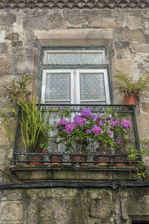 Portugal, Guimaraes, flowers on balcony outside window von Danita Delimont