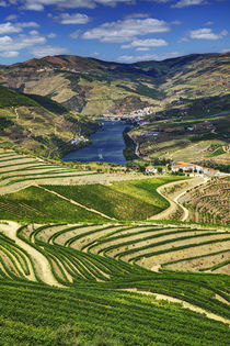 Terraced Vineyards linning the hills of the Duoro Valley von Danita Delimont