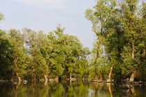 Channels and lakes in the Danube Delta, Romania by Danita Delimont