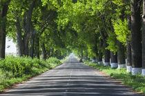 Romania, Danube River Delta, Salcioara, country road by Danita Delimont