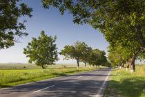 Romania, Danube River Delta, Tulcea, country road by Danita Delimont