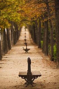 Spain, Madrid, Parque del Buen Retiro park, fall foliage von Danita Delimont