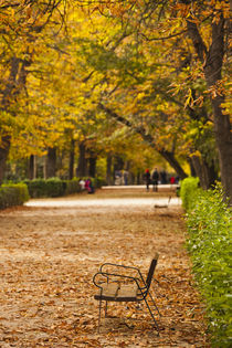 Spain, Madrid, Parque del Buen Retiro park, fall foliage by Danita Delimont