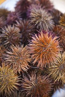 Spain, Andalucia Region, Cadiz Province, Cadiz, sea urchins for sale by Danita Delimont