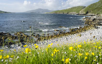 Isle of Harris, Scotland, UK von Danita Delimont
