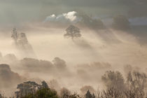Misty autumn morning, Uley, Gloucestershire, UK by Danita Delimont