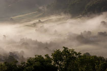 Morning mist, Gloucestershire by Danita Delimont