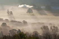 Misty autumn morning, Uley, Gloucestershire, England, UK by Danita Delimont