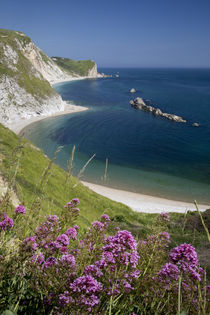 Wildflowers above Man O War Bay along the Jurassic Coast, Do... by Danita Delimont