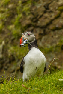 Europe, Scotland, Shetland Islands von Danita Delimont