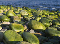 Rackwick Bay Beach, Hoy island, Orkney islands, Scotland. von Danita Delimont