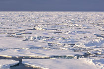 Pancake ice, Greenland Sea, East Coast of Greenland von Danita Delimont