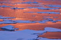 Sunset reflections, Greenland Sea, East Coast of Greenland von Danita Delimont