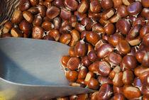 Sweet Chestnuts von Danita Delimont
