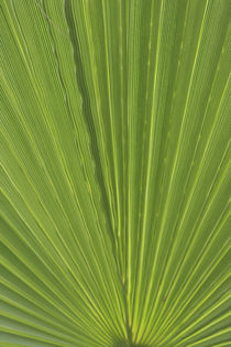 Detail of Palm Tree Frond by Danita Delimont