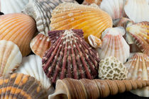 Detail of seashells from around the world. by Danita Delimont