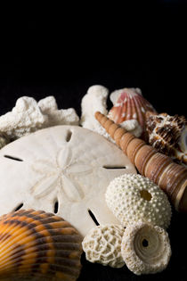 Detail of seashells from around the world. von Danita Delimont