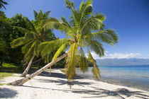 Waitatavi Bay, Vanua Levu, Fiji by Danita Delimont
