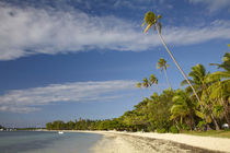 Beach and palm trees, Plantation Island Resort, Malolo Laila... von Danita Delimont