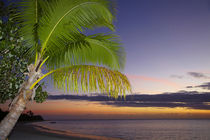 Palm trees and sunset, Plantation Island Resort, Malolo Lail... von Danita Delimont