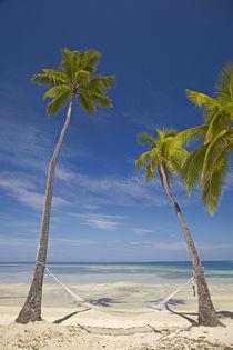 Hammock and palm trees, Plantation Island Resort, Malolo Lai... von Danita Delimont