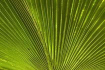 Palm frond, Nadi, Viti Levu, Fiji, South Pacific von Danita Delimont