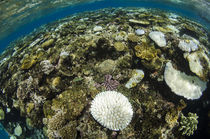 Coral Reef Diversity von Danita Delimont