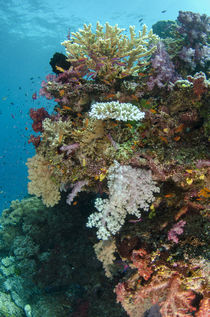 Coral Reef Diversity by Danita Delimont