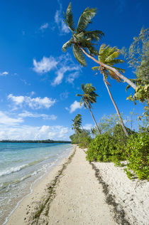 Palm fringed white sand beach on an islet of Vava'u, Tonga, ... by Danita Delimont