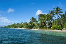 Palm fringed white sand beach on an islet of Vava'u, Tonga, ... von Danita Delimont