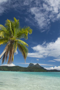 French Polynesia, Society Islands, Leeward Islands, Bora Bora by Danita Delimont