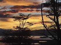 Argentina, Ushuaia, Sunrise von Danita Delimont