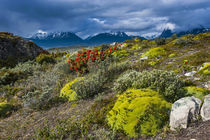 Colorful moss on an island in the Beagle Channel, Ushuaia, T... von Danita Delimont