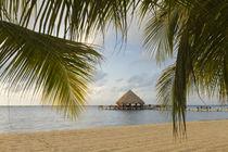 A palapa and sandy beach, Placencia, Belize von Danita Delimont