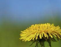 Blume, Flower von Georg Hirstein