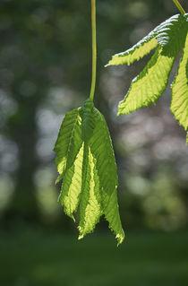 Blätter, Leafs von Georg Hirstein