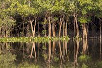 Brazil, Mato Grosso, The Pantanal, Rio Negro von Danita Delimont